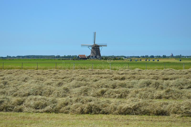 Windmill, Grassland, Field, Grass Family royalty free stock photo