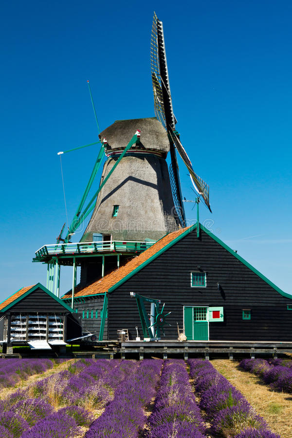 Windmill in holland royalty free stock image