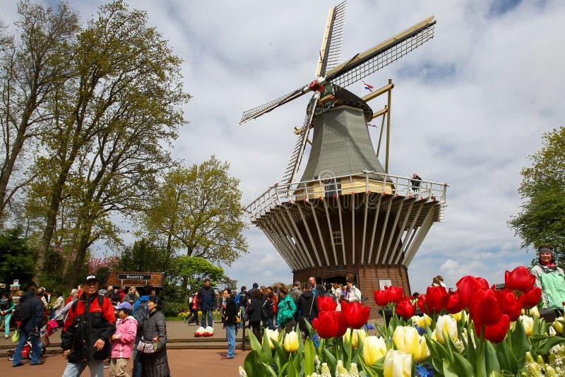 Windmill at the keukenhof garden stock photos