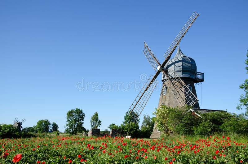 Windmill and poppy field royalty free stock images