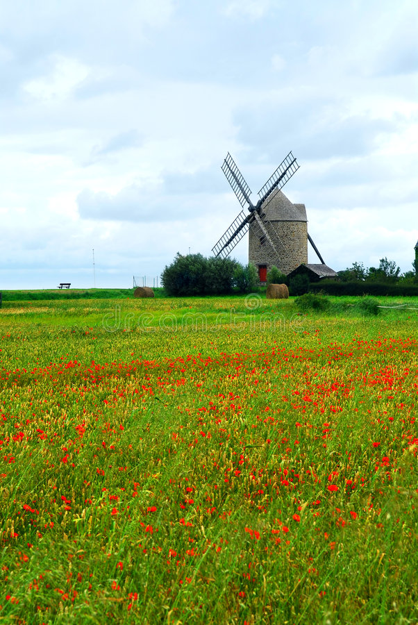 Windmill And Poppy Field Stock Photos