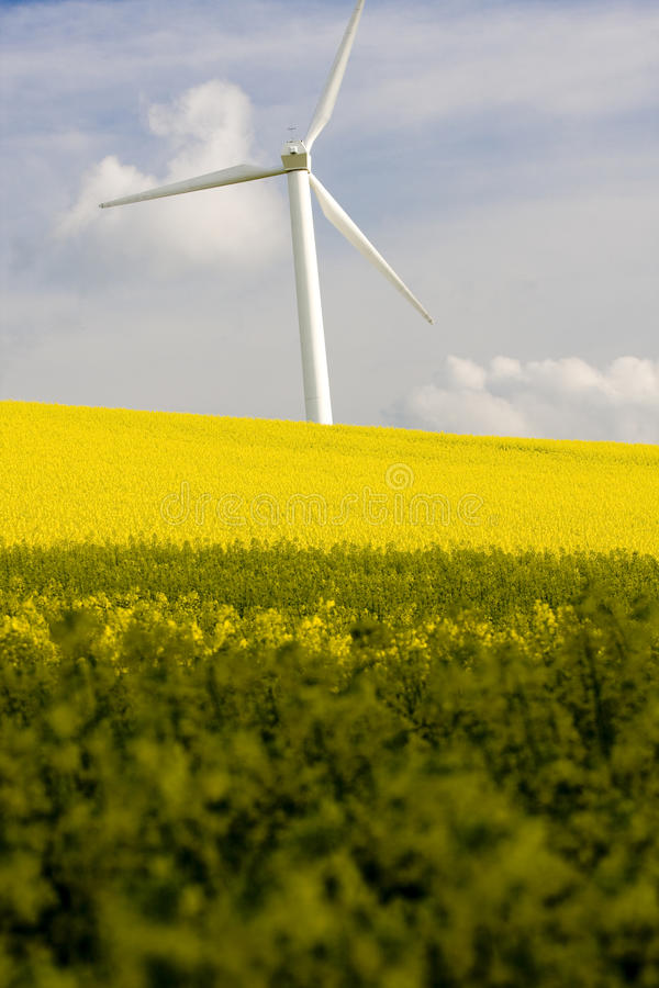 Windmill And Field Royalty Free Stock Photography