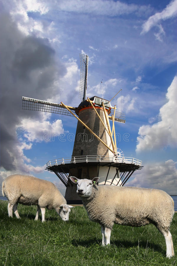 Windmill and sheep royalty free stock image