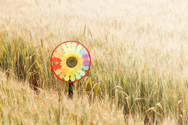 Toy windmills in ripe wheat royalty free stock image