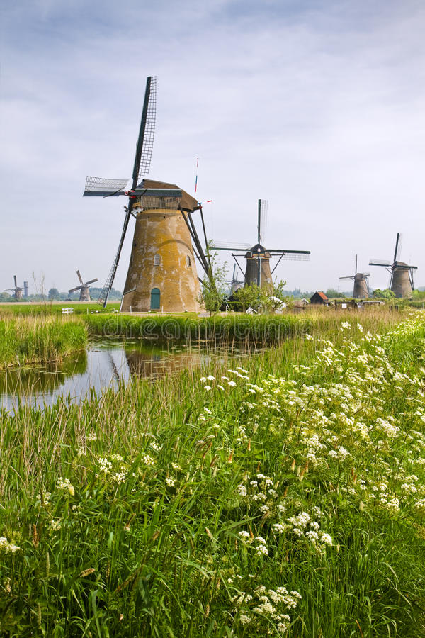 Free Windmills At Kinderdijk, The Netherlands In Spring Stock Photo - 24994100