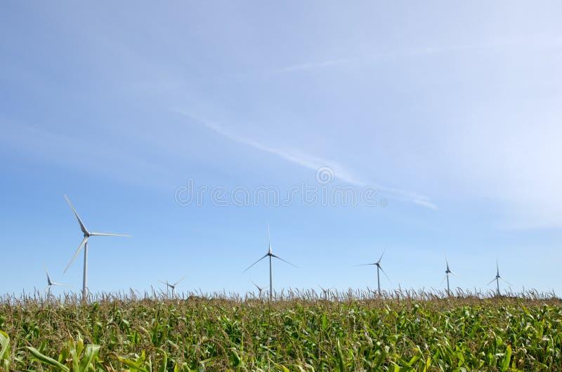 Windmills in a corn field stock image