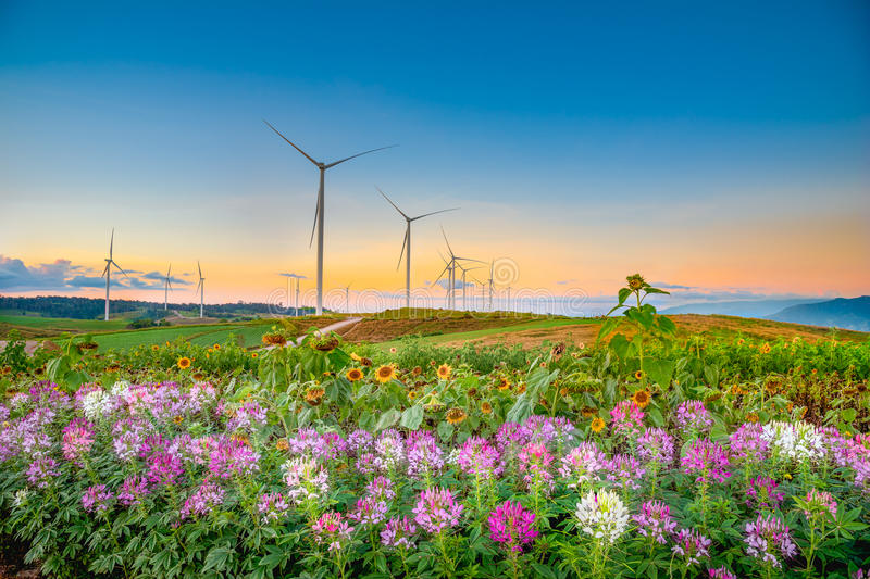 Windmills new energy with spring flower in twilight time. Windmills new energy with spring flower in twilight time at Khao Kho, Phetchabun, Thailand stock photo