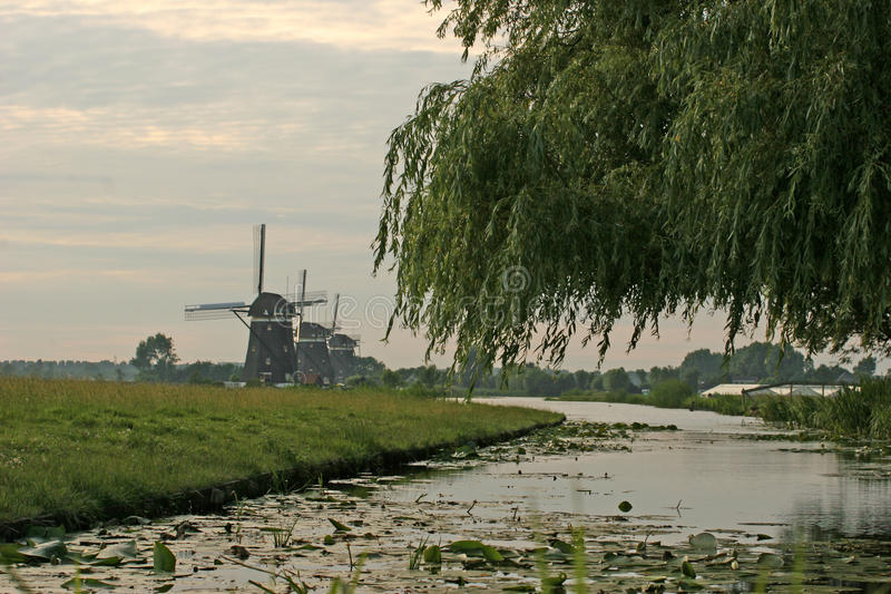 Windmills and river. Three windmills with river around,cloudy evening stock photo
