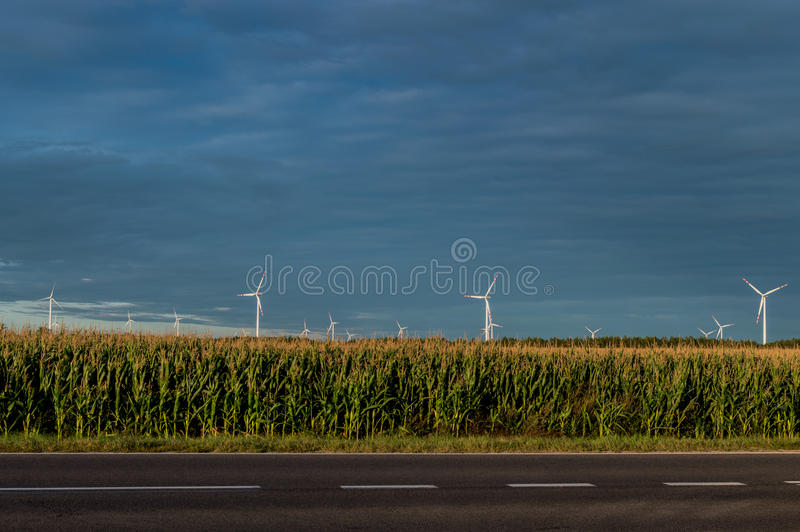 Windmills standing on corn field. Beautiful rural landscape with windmills.  stock photography