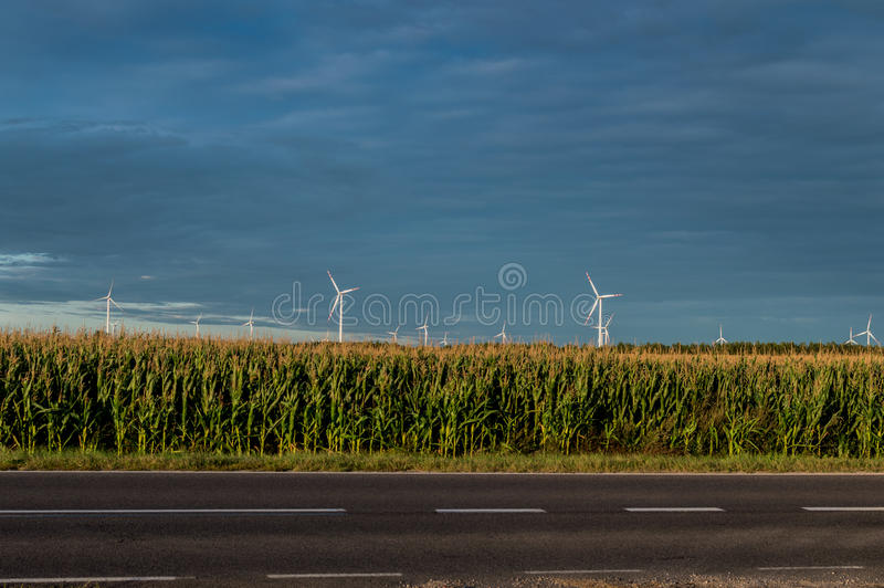 Windmills standing on corn field. Beautiful rural landscape with windmills.  royalty free stock image