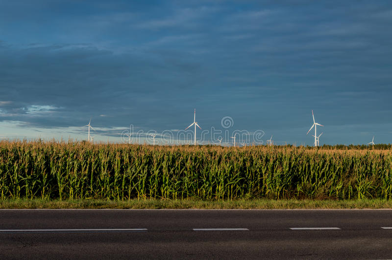 Windmills standing on corn field. Beautiful rural landscape with windmills.  royalty free stock images