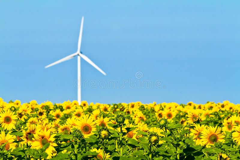Windmills and sunflowers stock image