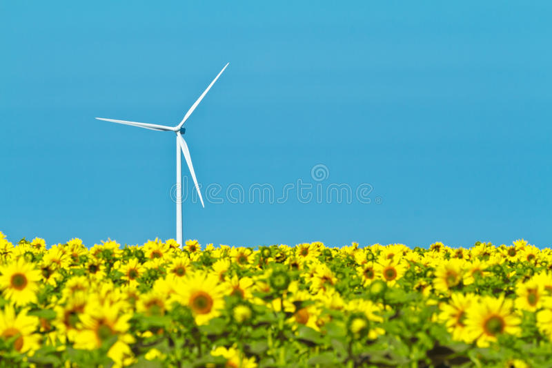 Windmills and sunflowers. Typical windmill or aerogenerator of aeolian energy and a field of sunflowers stock photography