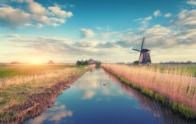 Windmills at sunrise. Rustic spring landscape. With dutch windmills near the water canals, yellow reeds and blue sky with clouds reflected in water. Amazing stock image