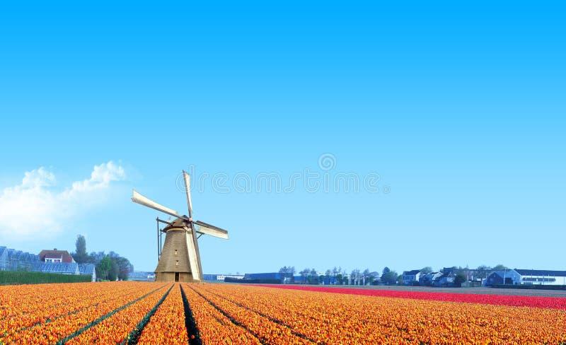 Windmolen bij het Gele Landbouwbedrijf van de Bol van de Tulp royalty-vrije stock afbeeldingen