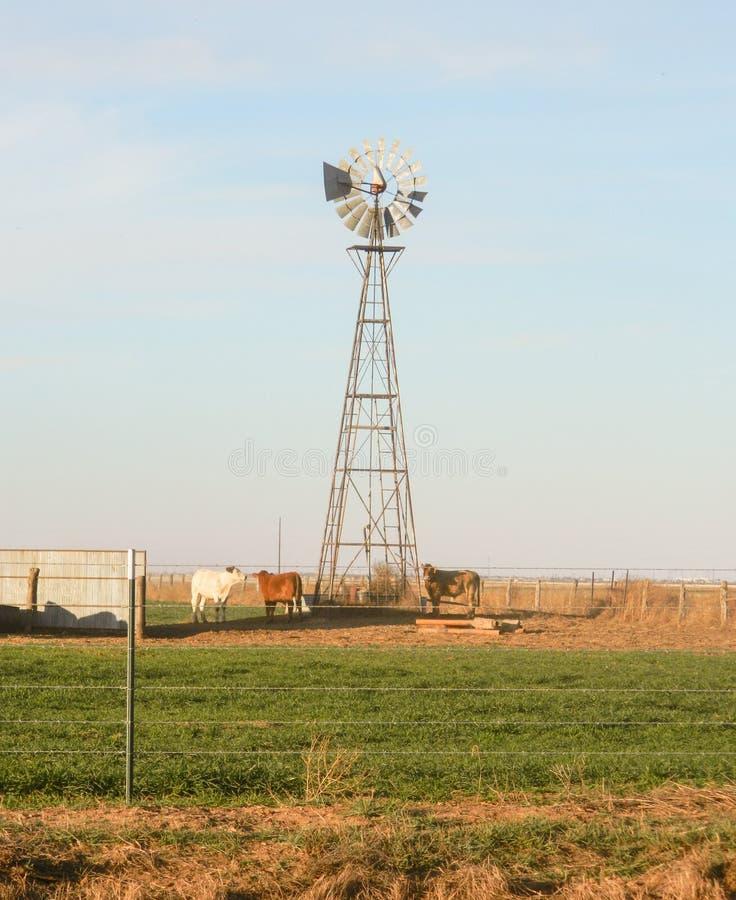 Windmolen en vee in Texas panhandle royalty-vrije stock foto