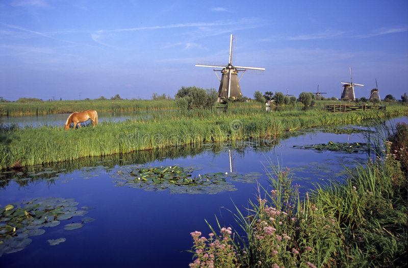 Windmolens in Kinderdijk stock afbeelding