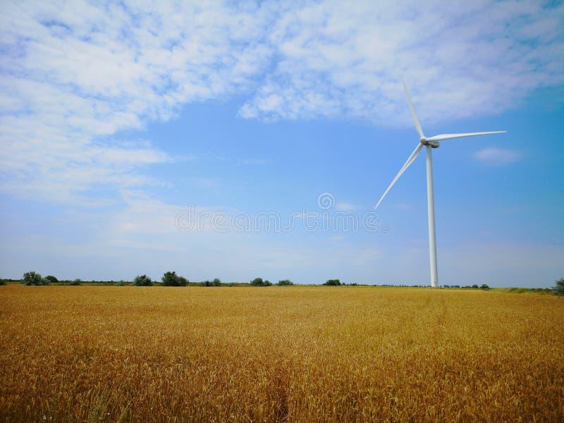 Windmolens op één van de tarwegebieden van de Oekraïne Energie - besparingsConcept stock fotografie