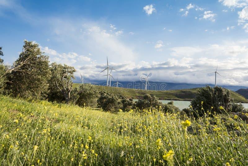 Windmolenslandbouwbedrijf bij de generatietechnologie van de lentetijd moderne macht royalty-vrije stock foto's