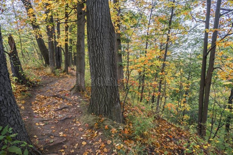 Windong de la trayectoria que camina a través del bosque en la cima de un dro escarpado fotografía de archivo libre de regalías