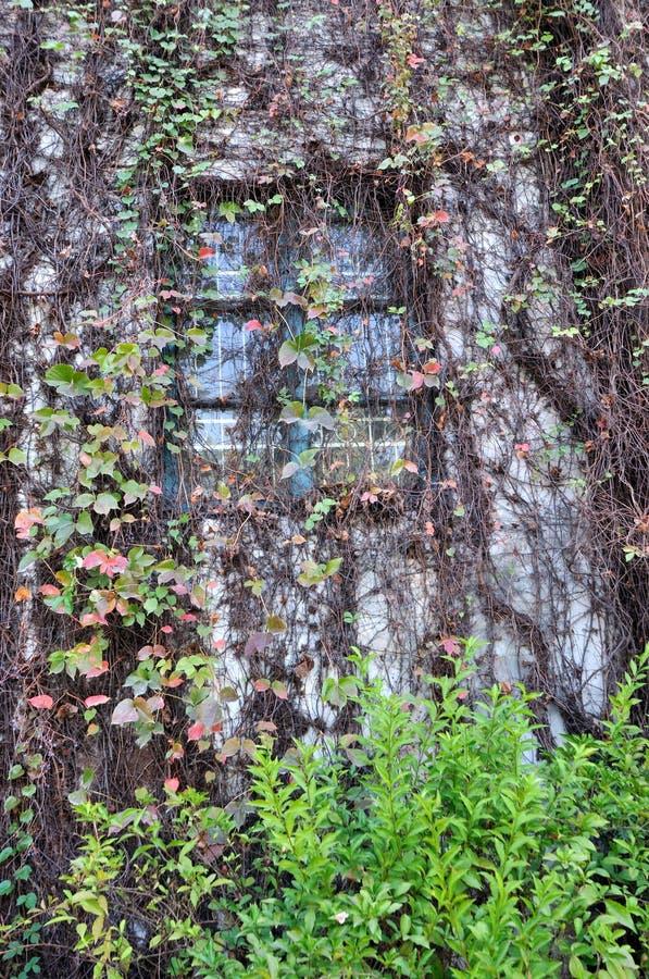 Free Window Among Liana Stock Images - 17134824