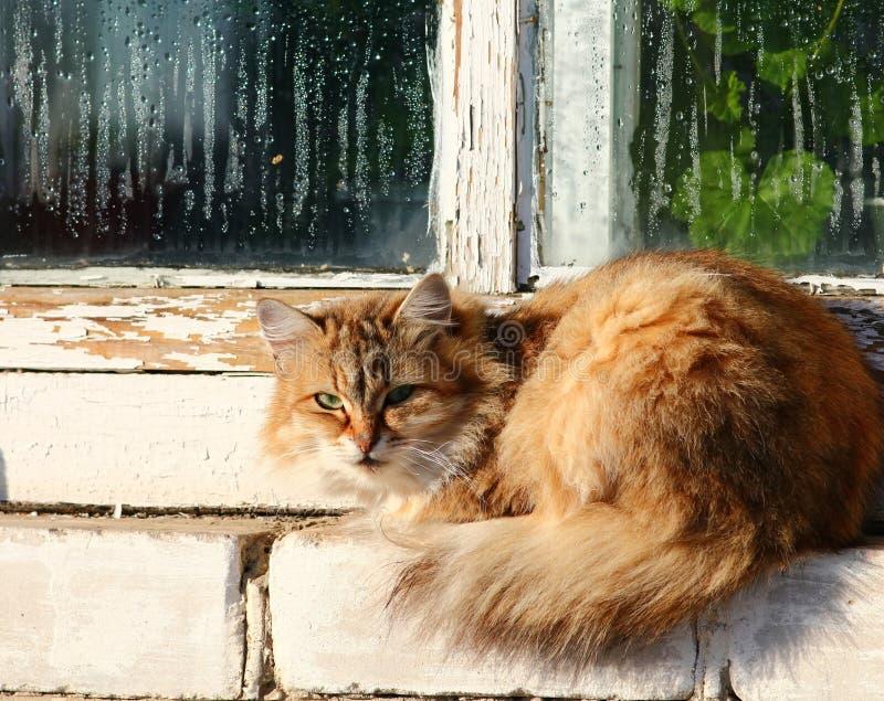 Window cat. Cat sitting at window-sill outside stock image