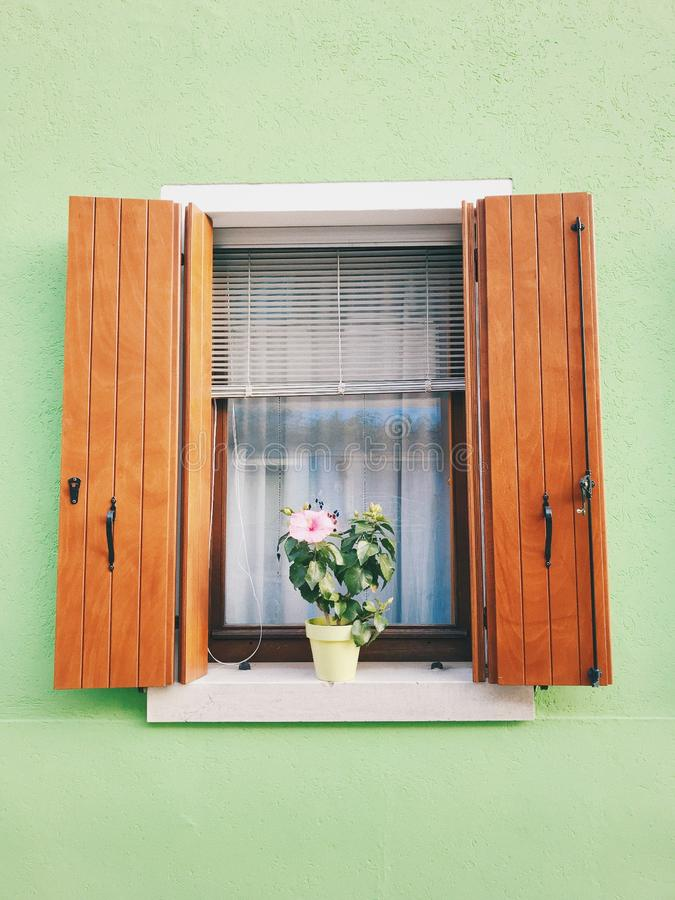 Window on a colorful light green wall with a flower in a pot on the windowsill. A window on a colorful light green wall with a flower in a pot on the windowsill stock image