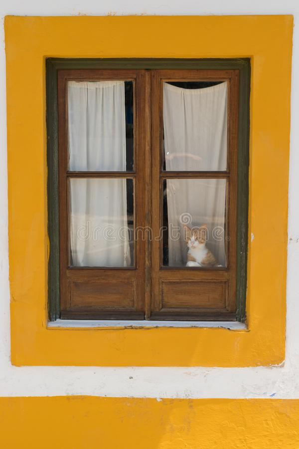 Window, colour and cat. In a coloured window a cat looks at the street trough the glass stock photos