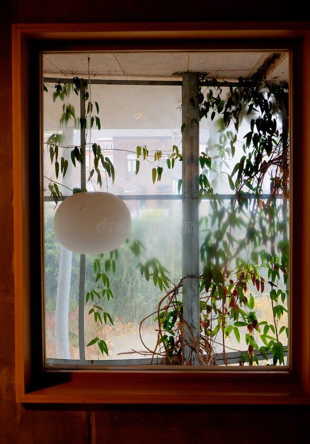 Download Window Internal Garden Condensation Stock Image   Image Of  Gardening, Design: 105350033