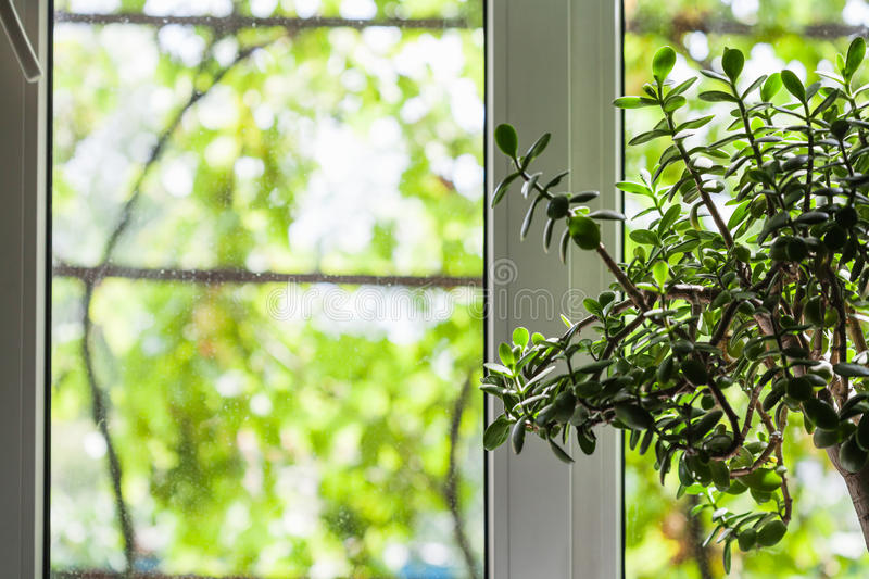 Window of country house in summer royalty free stock photo