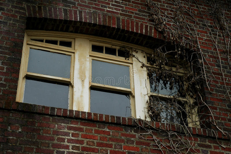 Window covered in ivy vines royalty free stock photo