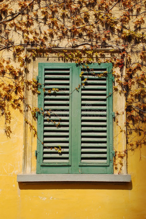 Window With Creeper royalty free stock photo