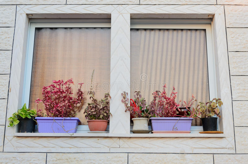 Delightful Download A Window With Curtains And Flower Pots On The Windowsill Outside  New Home Stock Image