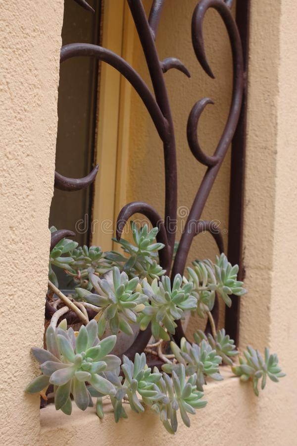 Window with curved forged iron bars and a potted succulent plant royalty free stock photo