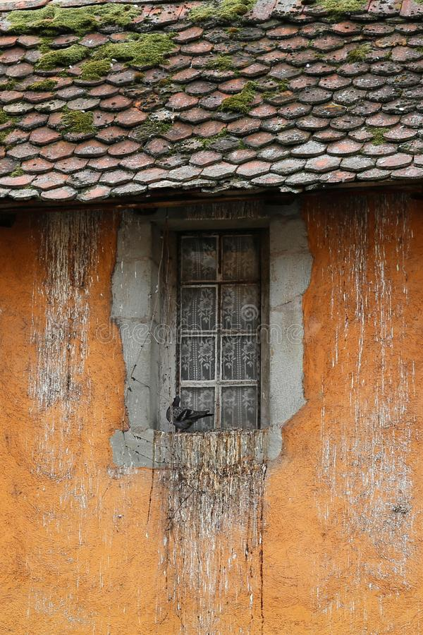Window with dove in Annecy. Detail of historic building in Annecy, terra cotta wall with dove in a window and mossy roof tiles royalty free stock photos