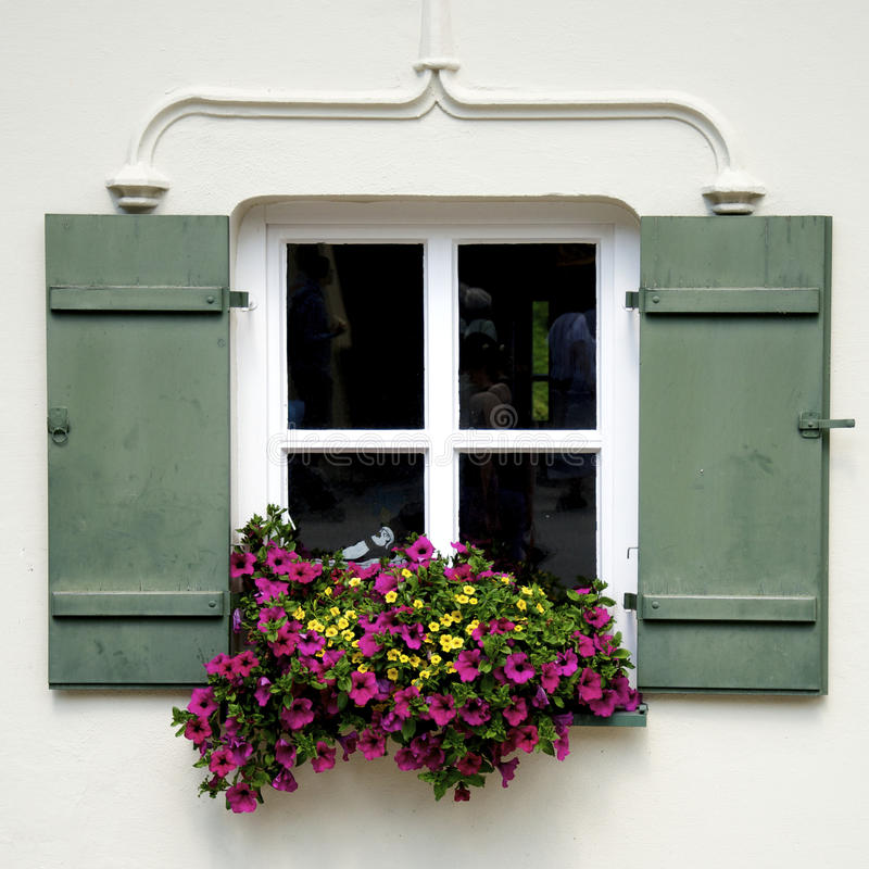 Window and Flower. Square window and red flower, Beauty royalty free stock photography