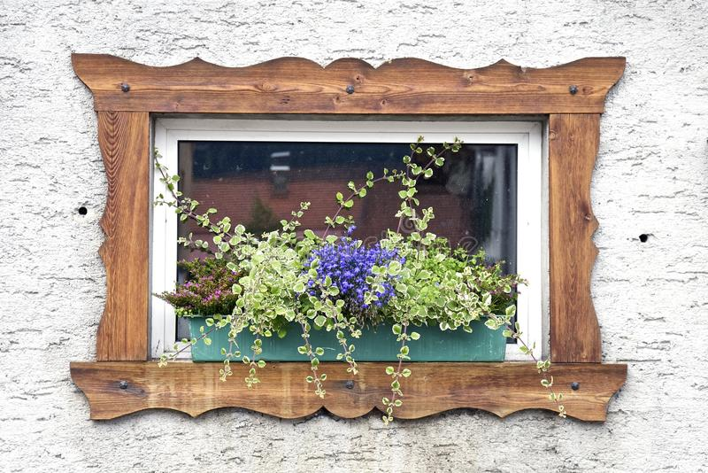 Window and Flower stock image
