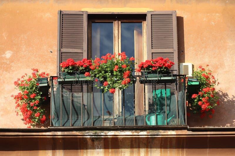 Window flowers stock image