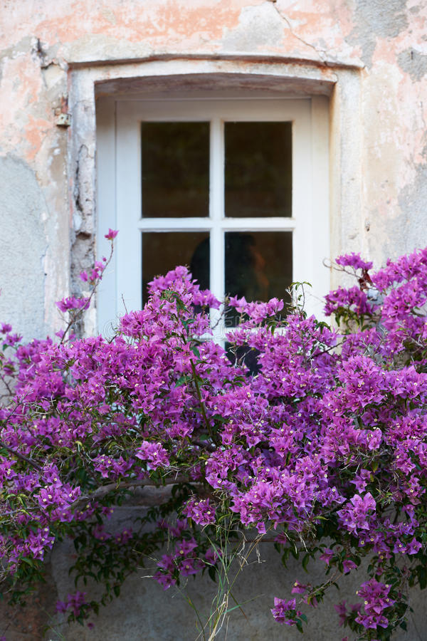 Download Window With Flowers In Saint Tropez Stock Photo - Image: 36114670