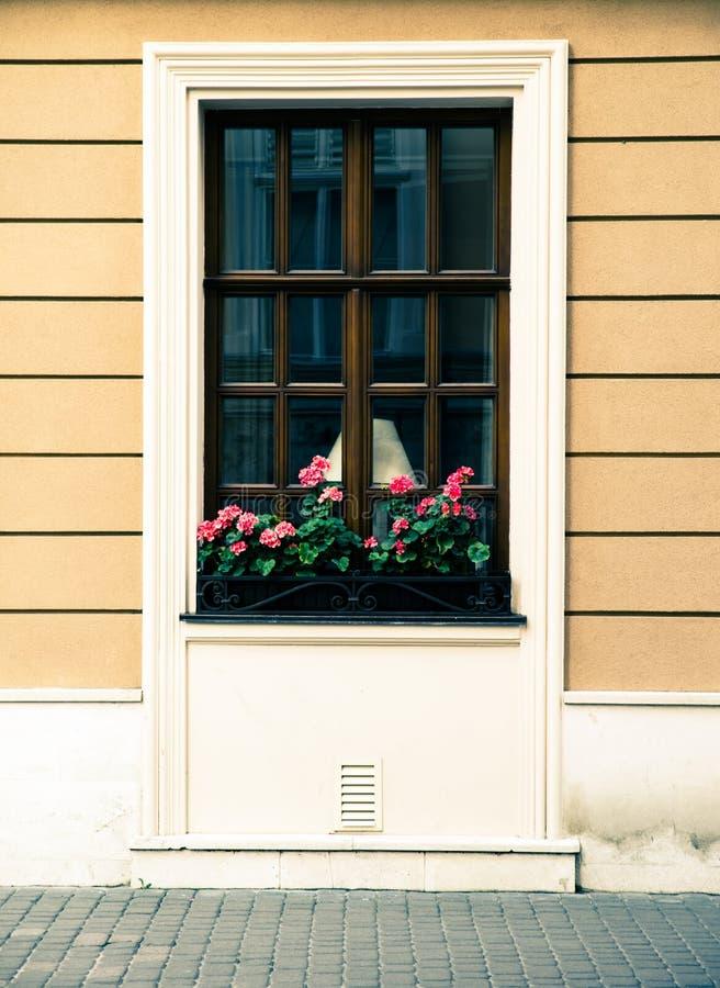 The window with flowers. Lviv. Ukraine stock photography