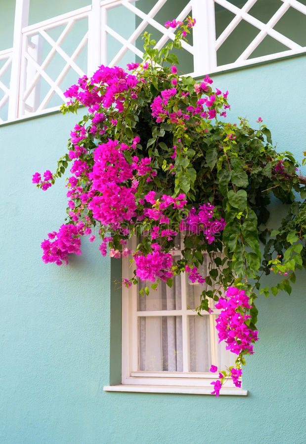 Download The Window Framed With Flowers Stock Image - Image: 34251821