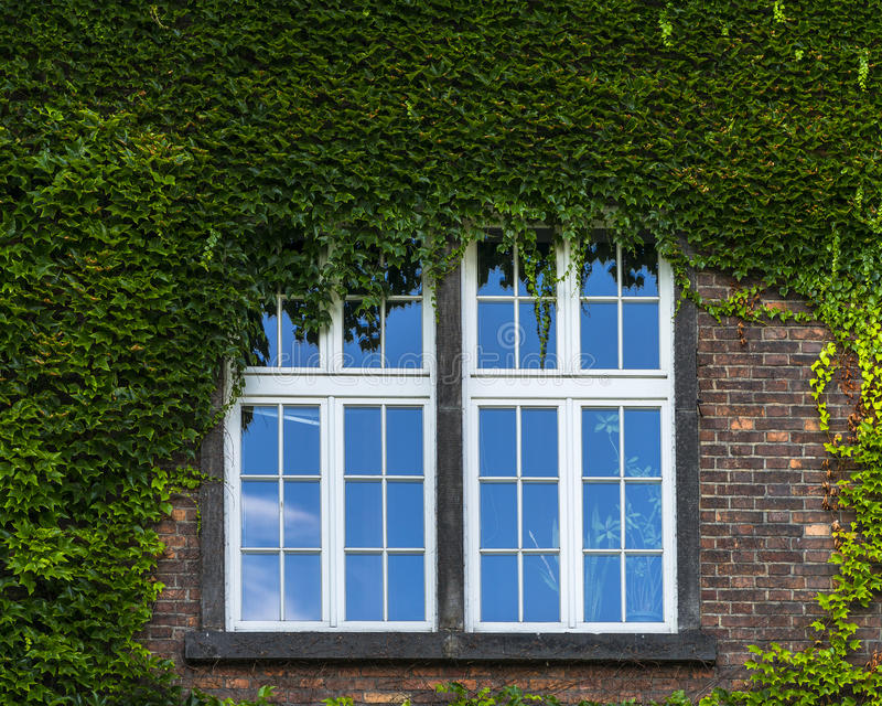 Window and grapevine royalty free stock photos