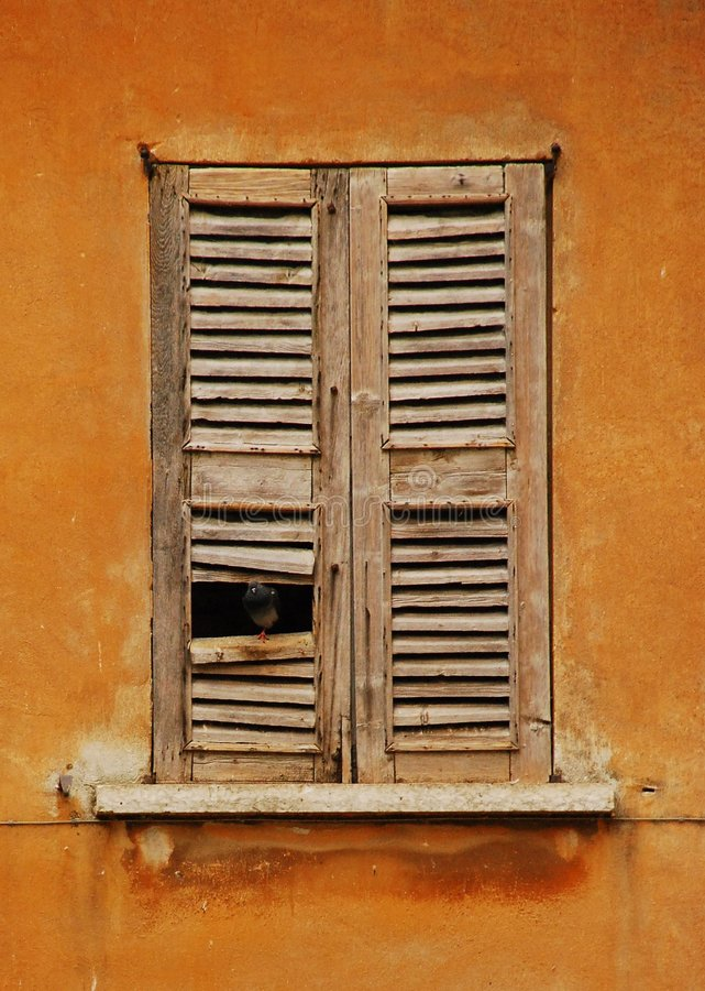 Window in Mantova with Pigeon royalty free stock photography