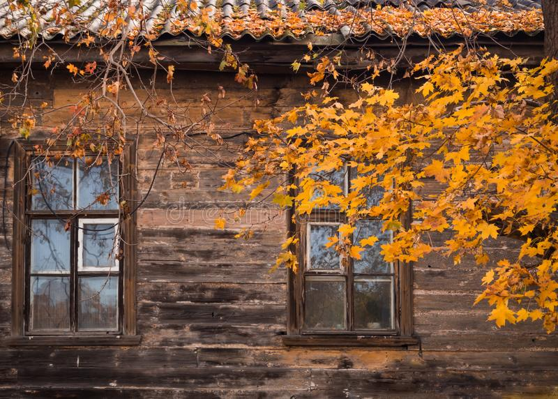 Window of old wooden house with a maple tree in the fall. royalty free stock photography