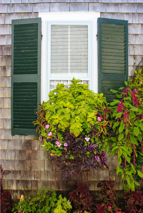 Window in rustic clapboard house with green shutters with window flower box full of beautiful plants. A Window in rustic clapboard house with green shutters with stock images