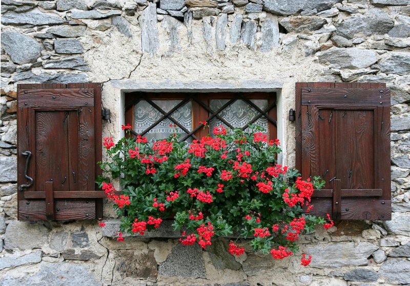 Download Window With Shutters And Flower Stock Photography - Image: 7498892