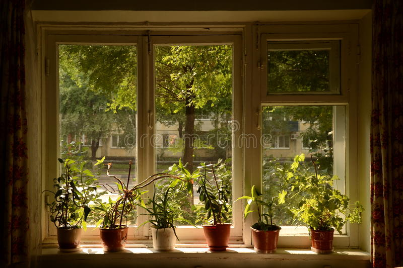 The window in the summer royalty free stock photo