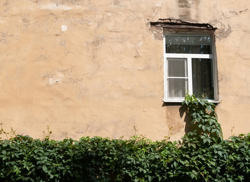 Window to wall at home entwined with ivy royalty free stock image