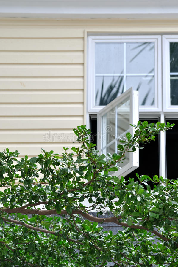 Download Window and tree branch stock photo. Image of plant, building - 21951310