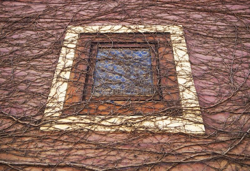 Window, Tree, Brickwork, Branch Free Public Domain Cc0 Image